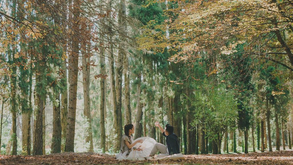 Sydney Wedding Photography Mt Wilson 8